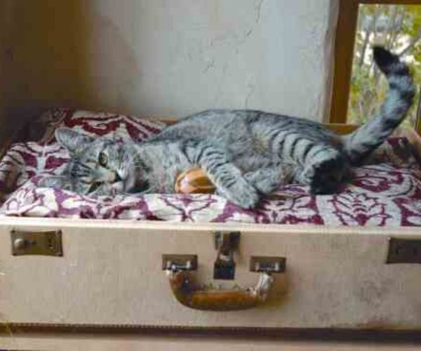 Suitcase Pet Bed with Cat on Top