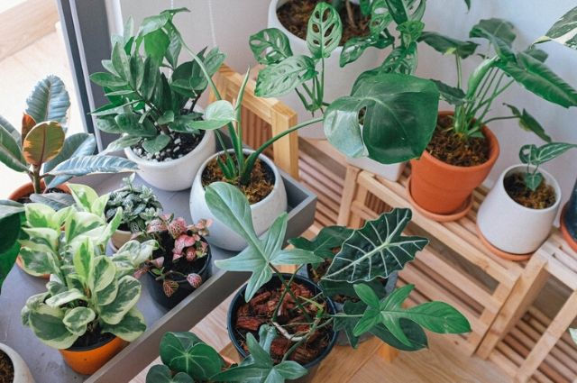 Several kinds of indoor plants over wood table
